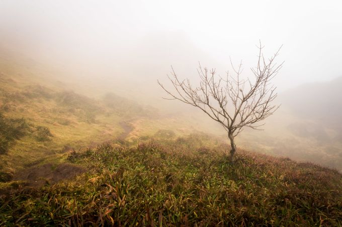 A misty morning on Cavehill