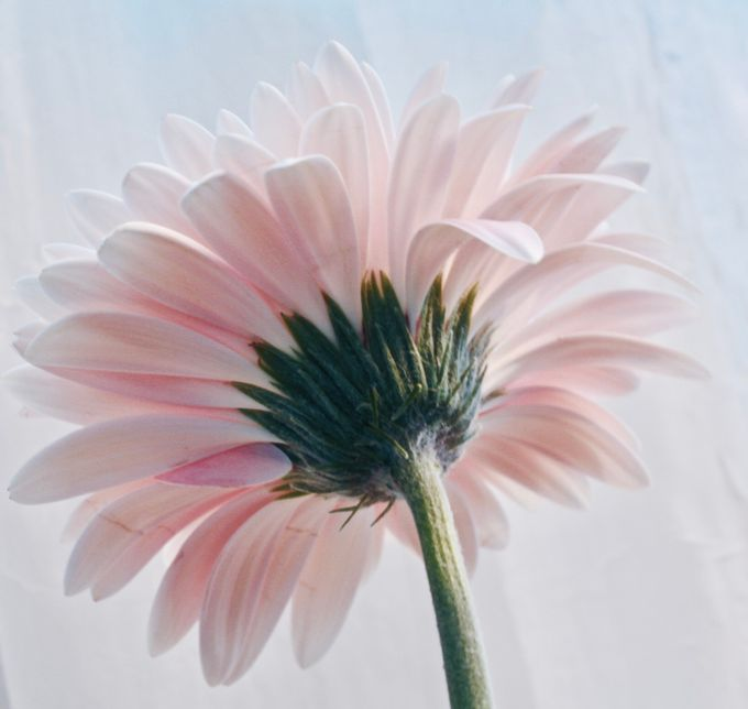 fullsizeoutput_c9d4 by TrishM - Pastel Colors Photo Contest