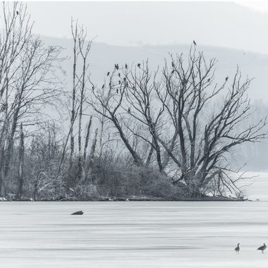 Bird island on frozen lake