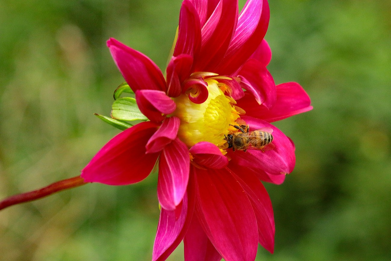 (IMG_1393_flower and bee)