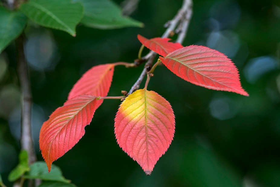 Harbingers of Autumn
