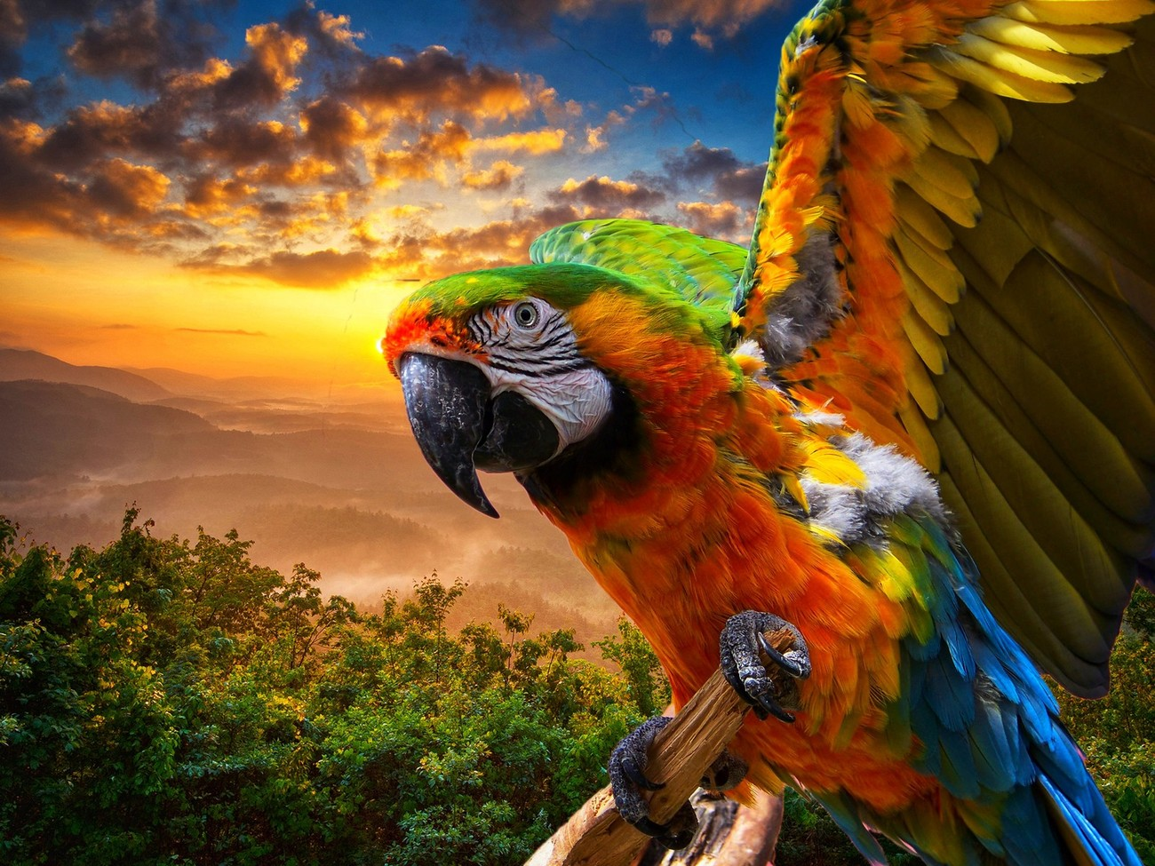 Macaw