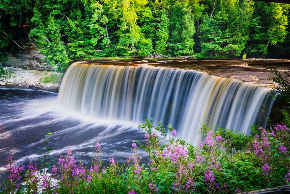 Upper Tahquamenon Falls in Michigan's Upper Peninsula. The blooming Fireweed in the fore...