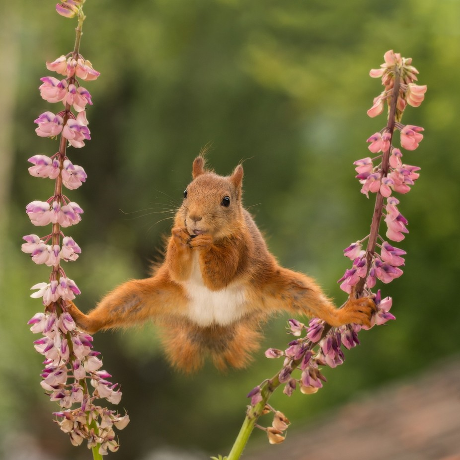 squirrel in a split by geertweggen - Image Of The Month Photo Contest Vol 31