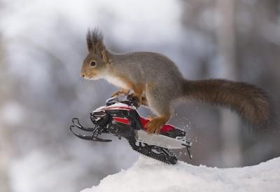 snow mobile squirrel