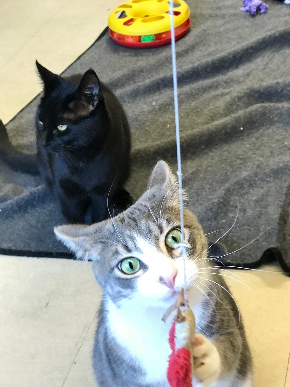 Waiting for adoption at Little cat lost rescue Edmonton