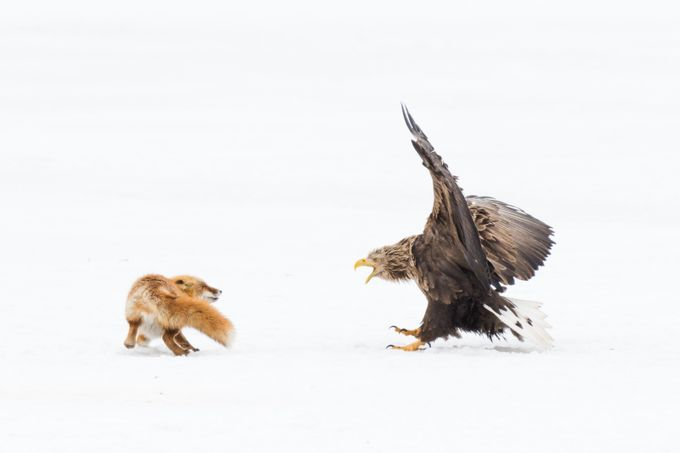 Versus  by journeytoinspiration - Majestic Eagles Photo Contest