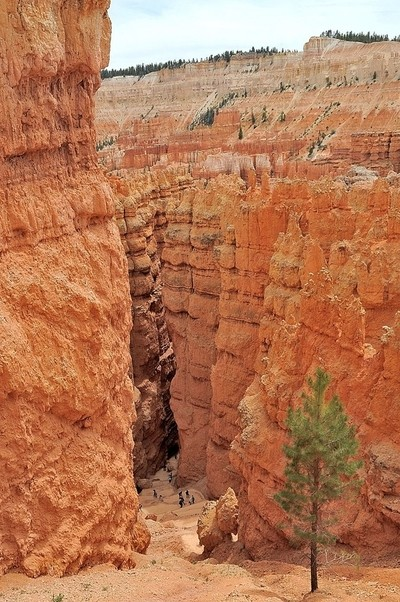 Down in Bryce Canyon  (132)