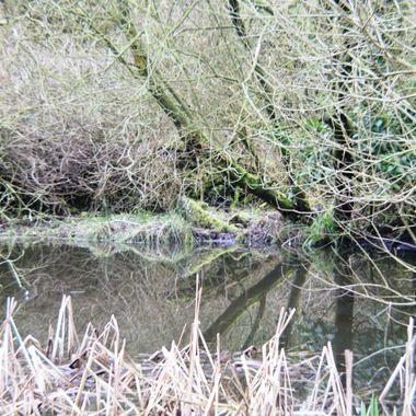 Hidden Pond at Southrepps Norfolk UK