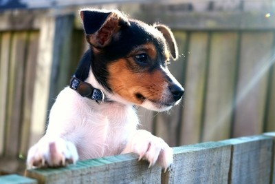 Puppy on a fence