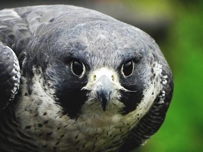 Staring contest at Kielder Bird of Prey Centre
