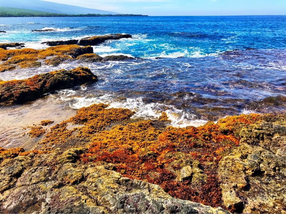 Favorite Places: Puʻuhonua o Hōnaunau