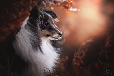 Magical Portrait