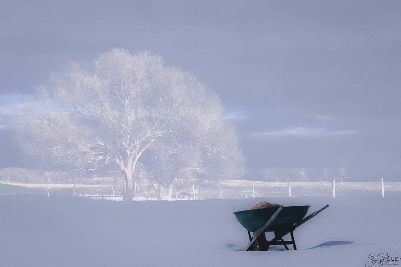 My neighbor has left her wheelbarrow in her yard all winter. Thought it would be a great reminder of just how long it's actually been sitting there with a picture of summer as the background!