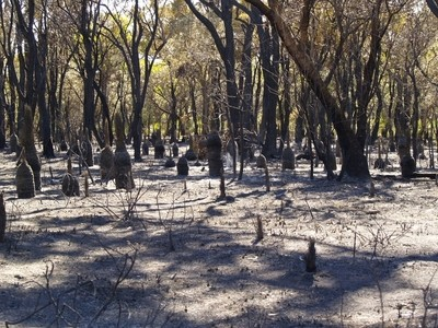 after the bush fire