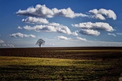 tree under clouds