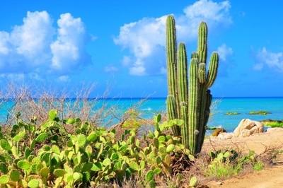 cactus meets the sea