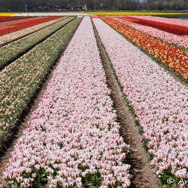Converging Flowers