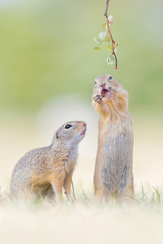 ~ Jealousy ~ by HenrikSpranz - Small Wildlife Photo Contest