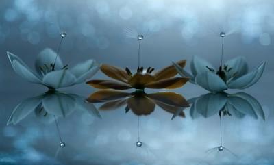 The Dandelion Trio