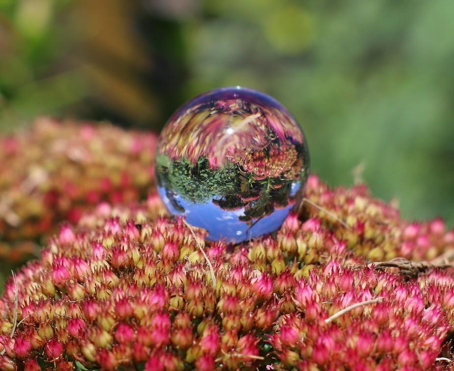 a 30mm glass ball on a flower