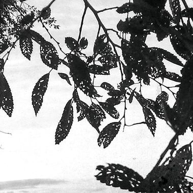 Leaves in silhouette, black-and-white