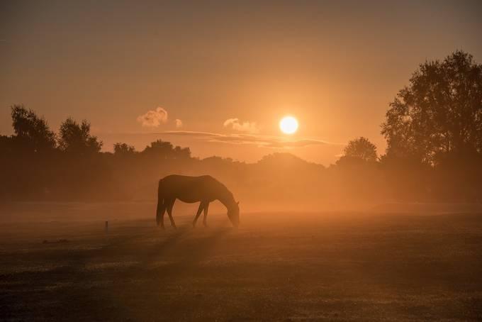 New Forest Sun Rise by Masphoto - Creative Landscapes Photo Contest vol3