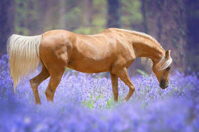 Nugget in the bluebells by vanessasiggardkay - Shades Of Purple Project