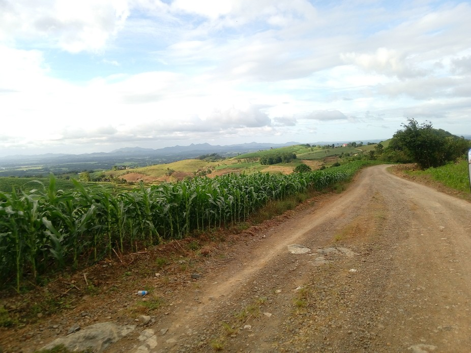 the traveling site in the Philippines. GMO corn plant.