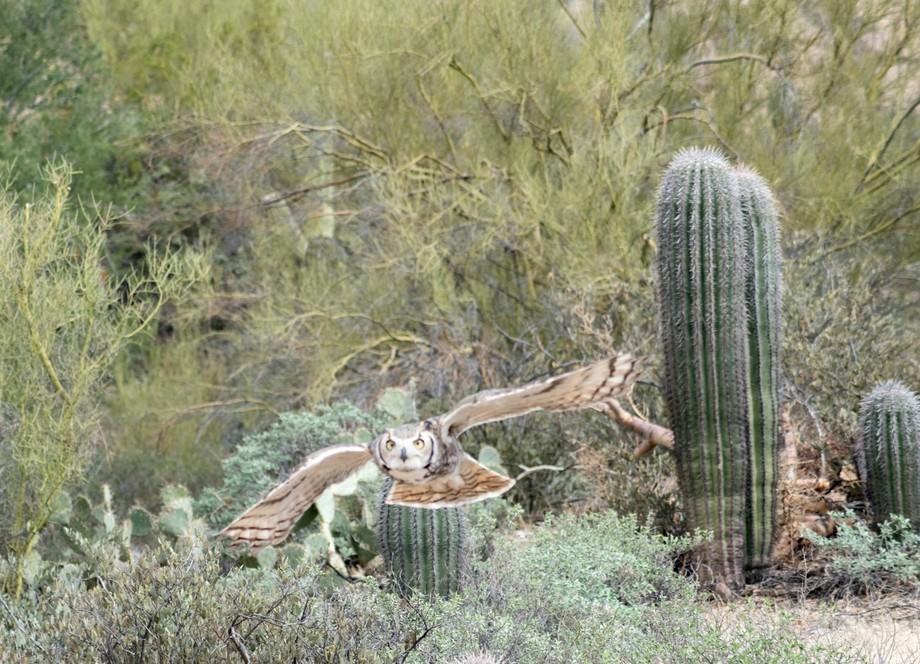 Taken in the Sonoran Desert outside of Tucson, Arizona.  Lens 70-300mm