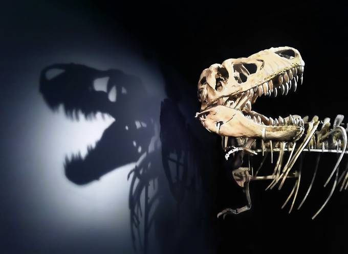 Tyrannosaurus by Rommerus - Experimental Light Photo Contest