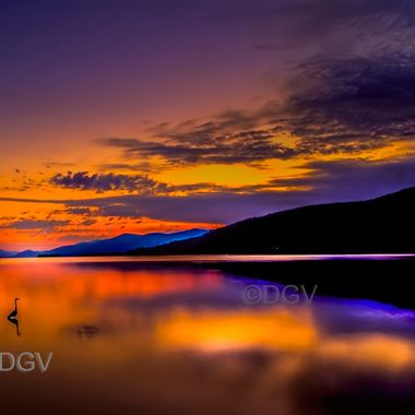 Lake George & Loon at dawn with mountians