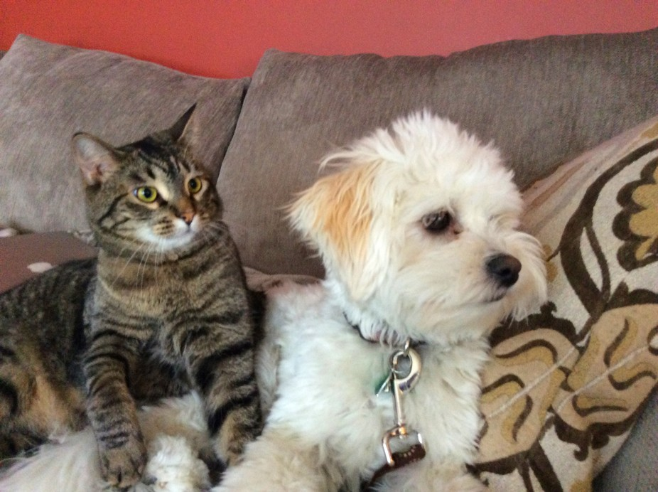 The cat's name is Elsa and the puppy's name is Rosie!!!