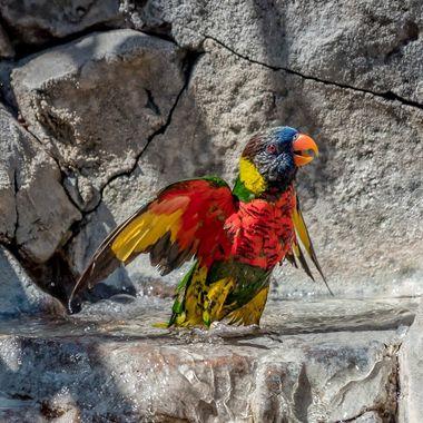 Parrot -Aquarium of Pacific-0047