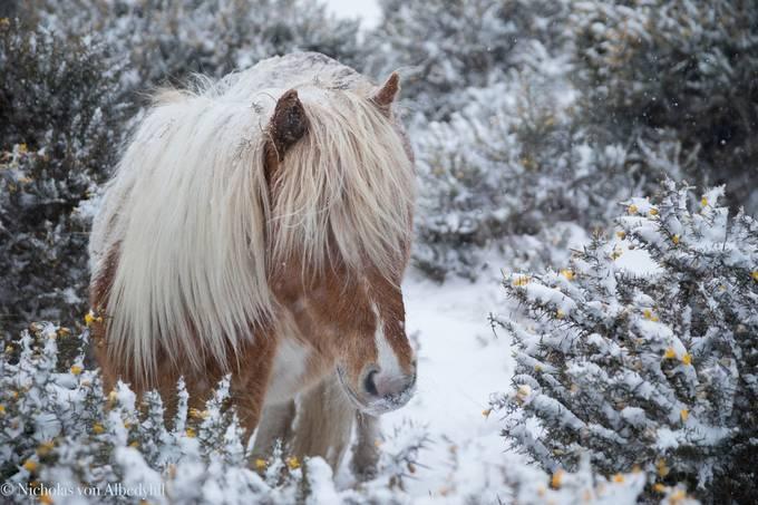"""Spring"" Horse by nicholasvonalbedyhll - Winter Wildlife Photo Contest"