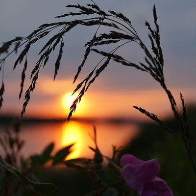 Dreaming of summer sunset