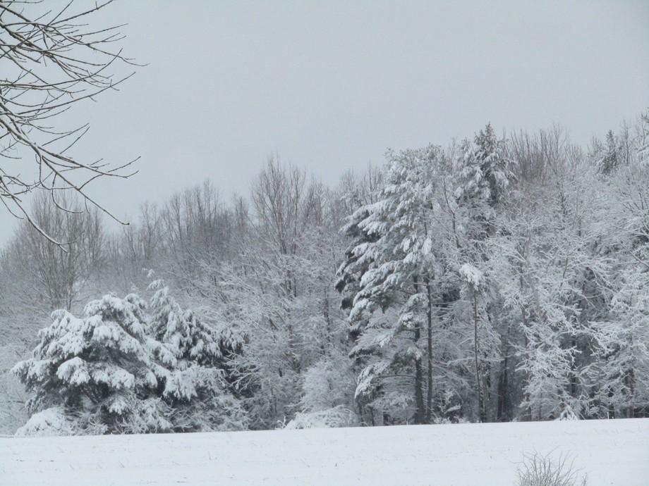 snowy spring day
