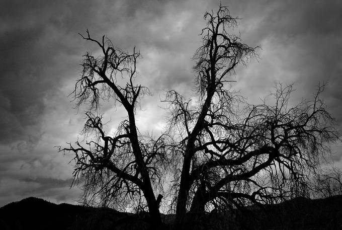 Dramatic Beauty by JayneBug - Tree Silhouettes Photo Contest
