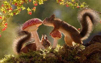 mushroom visit