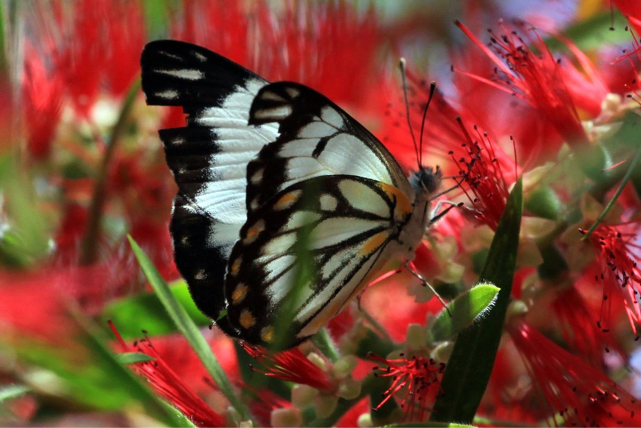 My first butterfly photo