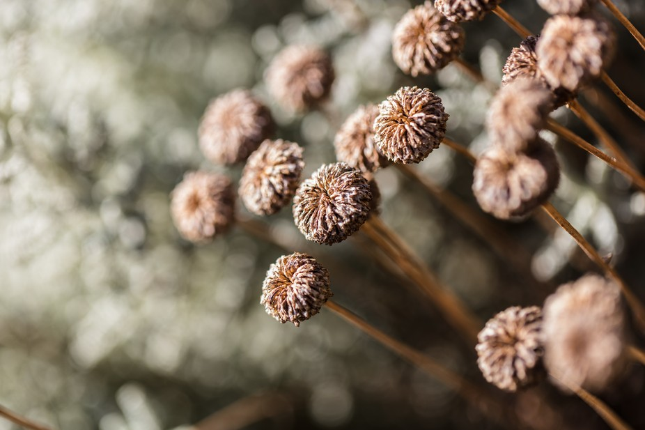 Dried Flower Collection 01