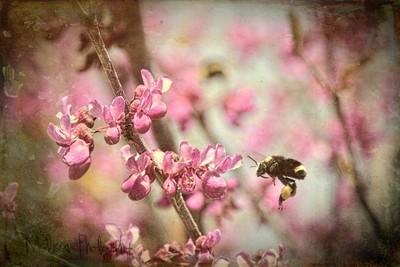 Dreamin' of Spring...