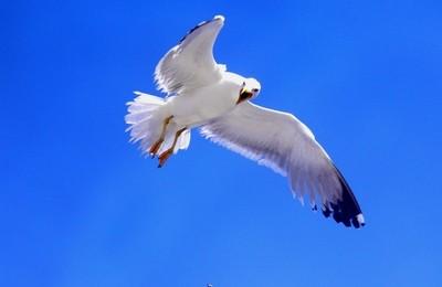 Attacking sea-gull! (Greece)