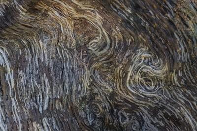 Tree bark abstract art