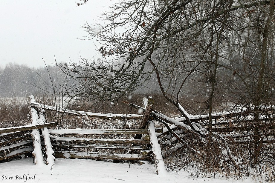 Winter Thicket 2