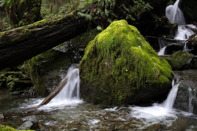Mossy rock with Waterfall in Quinault by gsciu - Boulders And Rocks Photo Contest