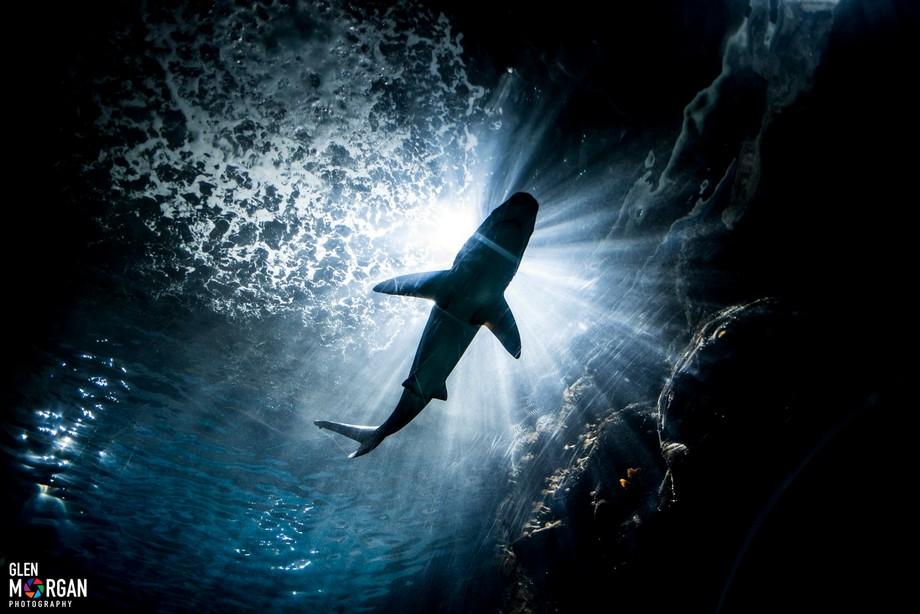 Shark visit