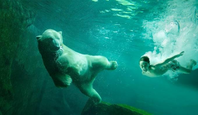 Meet the Polar bear by fotofrankyat - Fantasy In Color Photo Contest