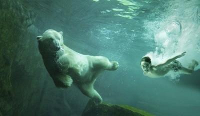 Meet the Polar bear