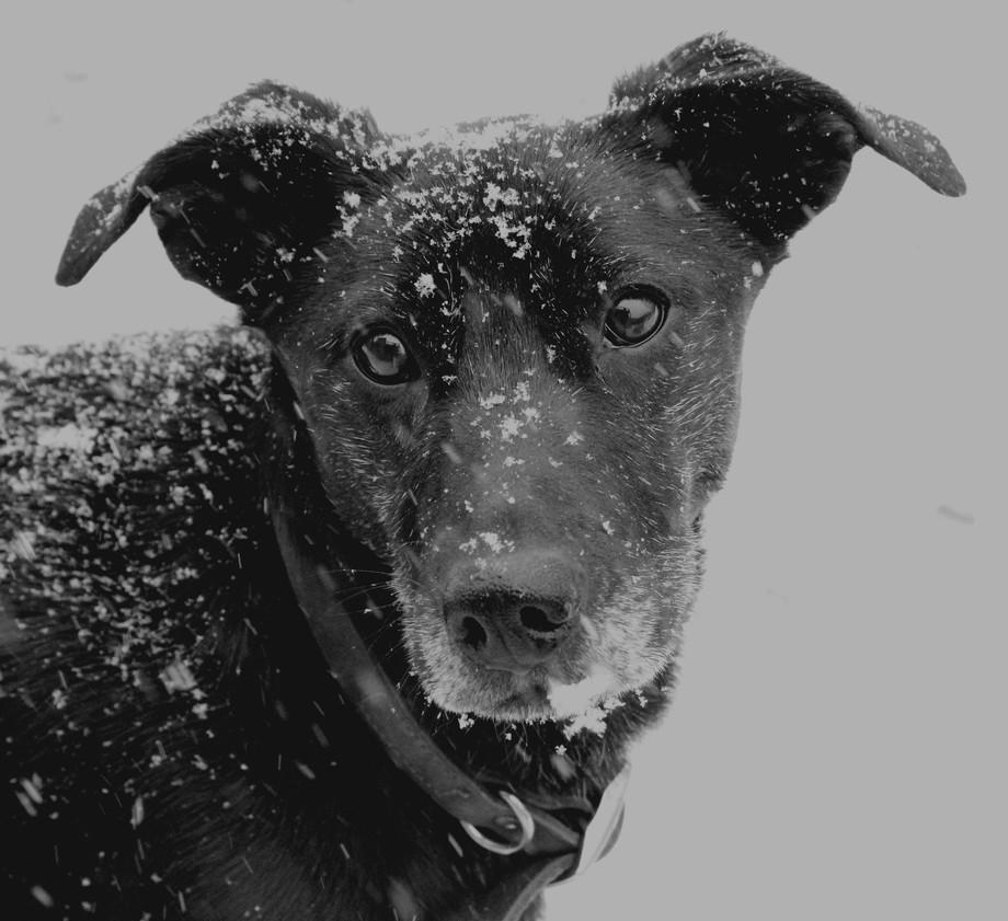 Eyes of Snow